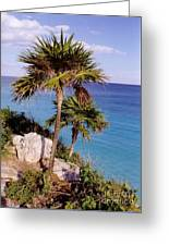 Palm Trees At Tulum Greeting Card