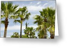 Palm Trees In Spain Greeting Card