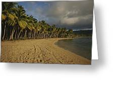 Palm Trees Line A Dominican Republic Greeting Card by Raul Touzon