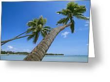 Palm Trees On A Tropical Beach, Fiji Greeting Card