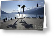 Palm Trees With Shadows Greeting Card