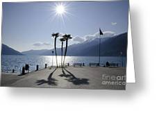 Palm Trees With Shadows On The Lakefront Greeting Card