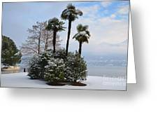 Palm Trees With Snow Greeting Card