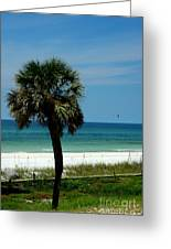 Palmetto And The Beach Greeting Card