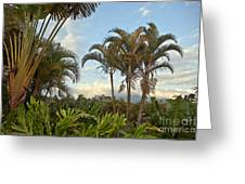 Palms In Costa Rica Greeting Card