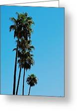 Palms Over Oak Greeting Card