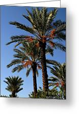 Palms9895b Greeting Card