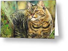 Palo Verde Kitty Greeting Card