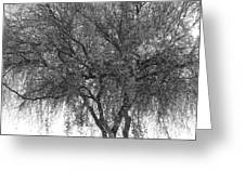 Palo Verde Tree 2 Greeting Card
