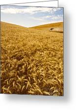 Palouse Wheat Greeting Card