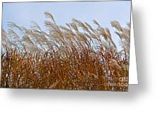Pampas Grass In The Wind 1 Greeting Card