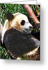 Panda In Tree Greeting Card
