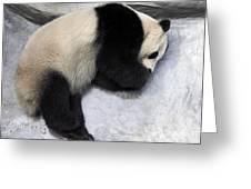 Panda Paws Greeting Card