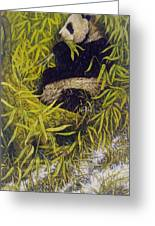 Panda Greeting Card by Steven Wood