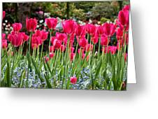 Panel Of Pink Tulips Greeting Card