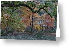 Panorama Of Fall Colors At Lost Maples Greeting Card