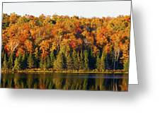 Panorama Of Trees Along The Waters Edge Greeting Card