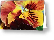 Pansies Greeting Card