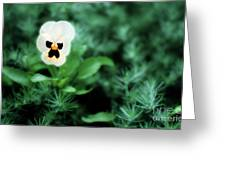 Pansy Face Greeting Card