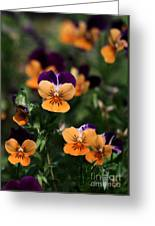 Pansy Garden Greeting Card