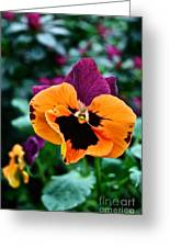 Pansy Power Greeting Card