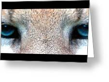 Panther Eyes Greeting Card