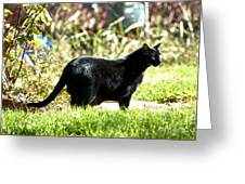 Panther In The Backyard Greeting Card