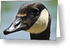 Papa Goose Eye Greeting Card