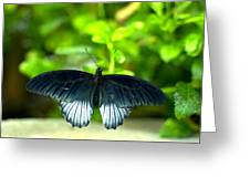 Papilio Lowii II Greeting Card