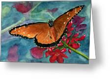Papilio Fandango  Greeting Card