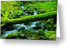 Paradise Of Mossy Logs And Slow Water   Greeting Card