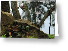 Paradise Springs Reflections Greeting Card