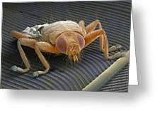 Parasitic Fly, Sem Greeting Card