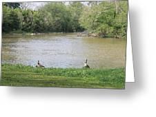 Parenting Geese 1 Greeting Card