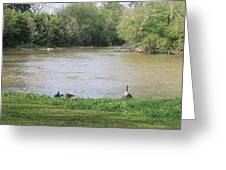 Parenting Geese 4 Greeting Card