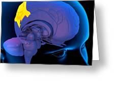 Parietal Lobe In The Brain, Artwork Greeting Card