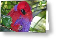 Parrot Attitude Greeting Card