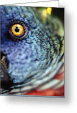 Parrot, Close Up Greeting Card
