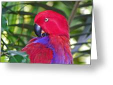 Parrot Power Greeting Card