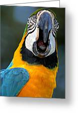 Parrot Squawking Greeting Card