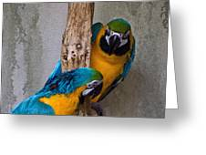 Parrot Talk Greeting Card