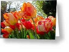 Parrot Tulips In Philadelphia Greeting Card