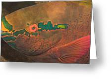 Parrotfish Scaridae Greeting Card