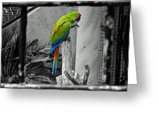 Parrott Thro The Cage Greeting Card