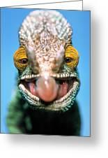 Parsons Chameleon Calumma Parsonii Greeting Card