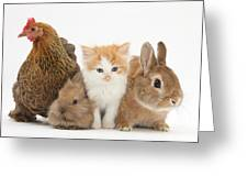 Partridge Pekin Bantam With Kitten Greeting Card