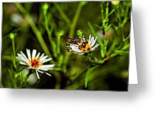 Party Flower Greeting Card