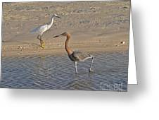 Passing Egrets Greeting Card