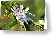 Passion Flower - May Pop Bloom Greeting Card