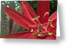 Passion Flower Blossom Costa Rica Greeting Card